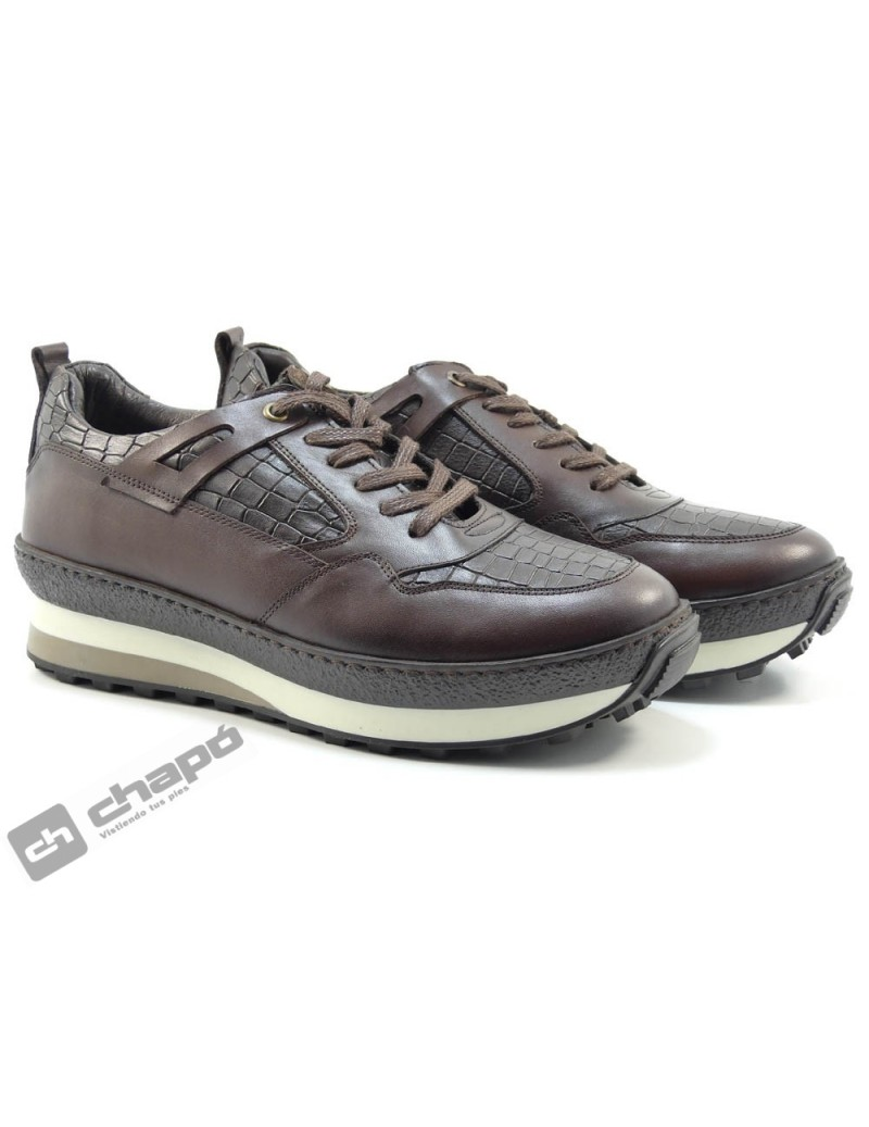 Snakers Marron Suave 4206