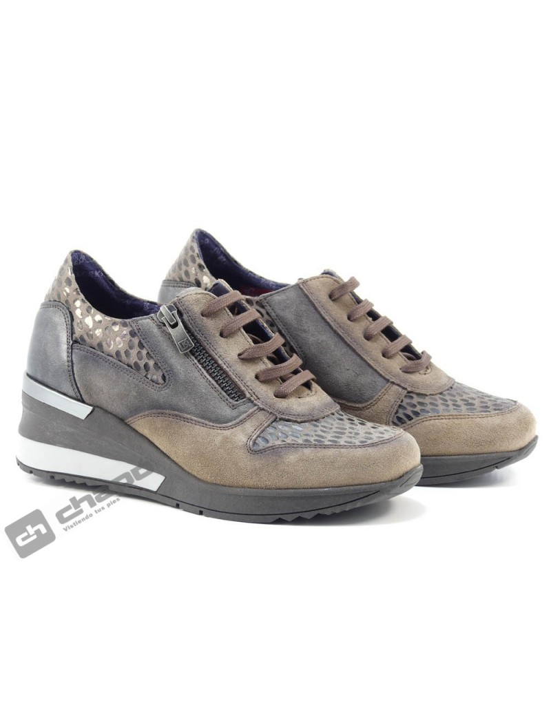 Sneakers Taupe Dorking D8590